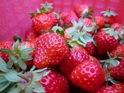 台湾大湖草莓